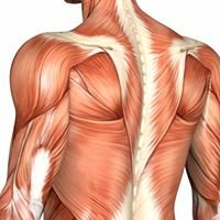 Muscle Fix - Massage Therapy for Health and Performance