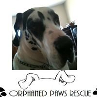 Orphaned Paws Rescue, Inc.