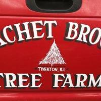 Pachet Brook Tree Farm