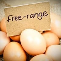 Knockanore Traditional Free Range eggs