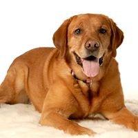 Ruffledale Pet Resort and Paw Spa