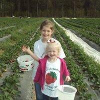 Copeland Strawberry Farm