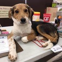 Saving Animals From Euthanasia