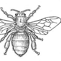 Swarmbustin' Honey