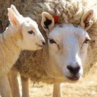 NRT's Sheep Pasture