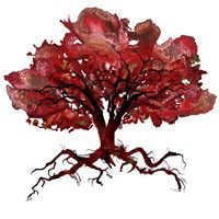 Majestic Oak Vineyard