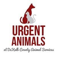 Urgent Animals at DeKalb County Animal Services