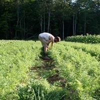 Farm Fresh Connection