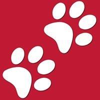 Atlanta Veterinary Specialists