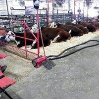 Circle S Farm Hamms Herefords.com