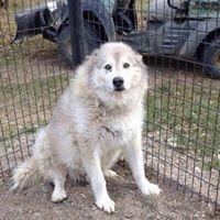 12 Hills Dog Rescue