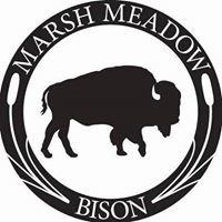 Marsh Meadow Bison