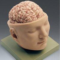 Trinity College Neuroscience