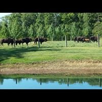 Ohio Bison Farm