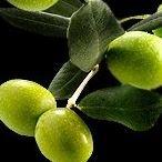 LaCrosse Olive Oil Co.