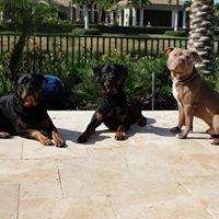 The Loyal Hound Dog Training & Rehabilitation