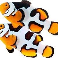Fjw Aquarium