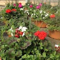 Buds & Blooms Nursery LLC.