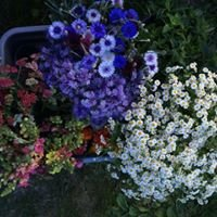 26th Street Farm and Flowers