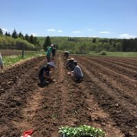 UMD Land Lab, aka Sustainable Agriculture Project - SAP Farm