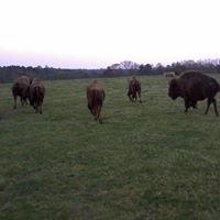Jezreel farms