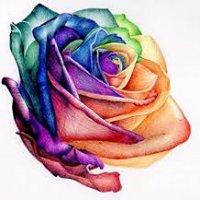 The Wild Rose of Midland