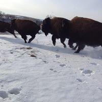Kremer Buffalo Company