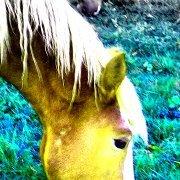 yellow horse art studio