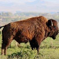 Brown's Buffalo Ranch