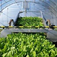 Vitruvian Farms