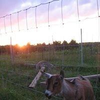 Sun Rush Community Farm (C.S.A.)