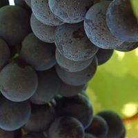 Somerset Wine Trail