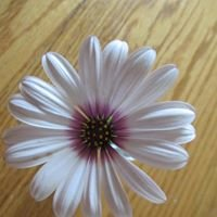 Vivian's Floral & Gift