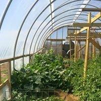 TLB Farm Greenhouse & Market