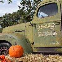 Harvest Hills Pumpkins