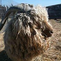 TLB Farm's Prairie Critters