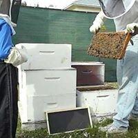 Bee Healthy Honey Farms