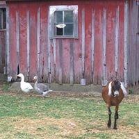 Old Dixie Pastures