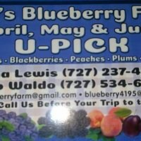 Bob's Blueberry Farm &  U-Pick