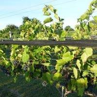 Golden Road Estate Vineyard & Winery
