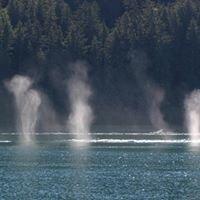 Taz Whale Watching-Cross Sound Express-Gustavus, Alaska