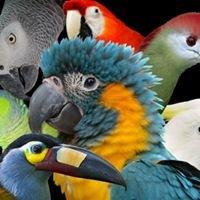 Parrot Cove Exotic Bird Preserve