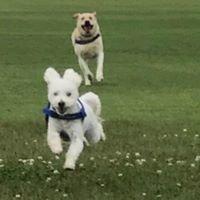 Nashville Dog Adventures