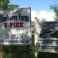 Czaika's Blueberry Farm