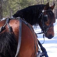 Pinewood Stables Carriage Service & Transport