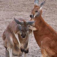 Hedrick Exotic Animal Farm
