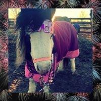 New Horizon Ranch Therapeutic Riding Center