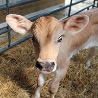 Alpine Hills Dairy Farm