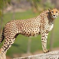 Cheetah Technologies