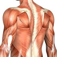 Bodyworkz Deep Tissue Muscle Therapy & Kinesiology